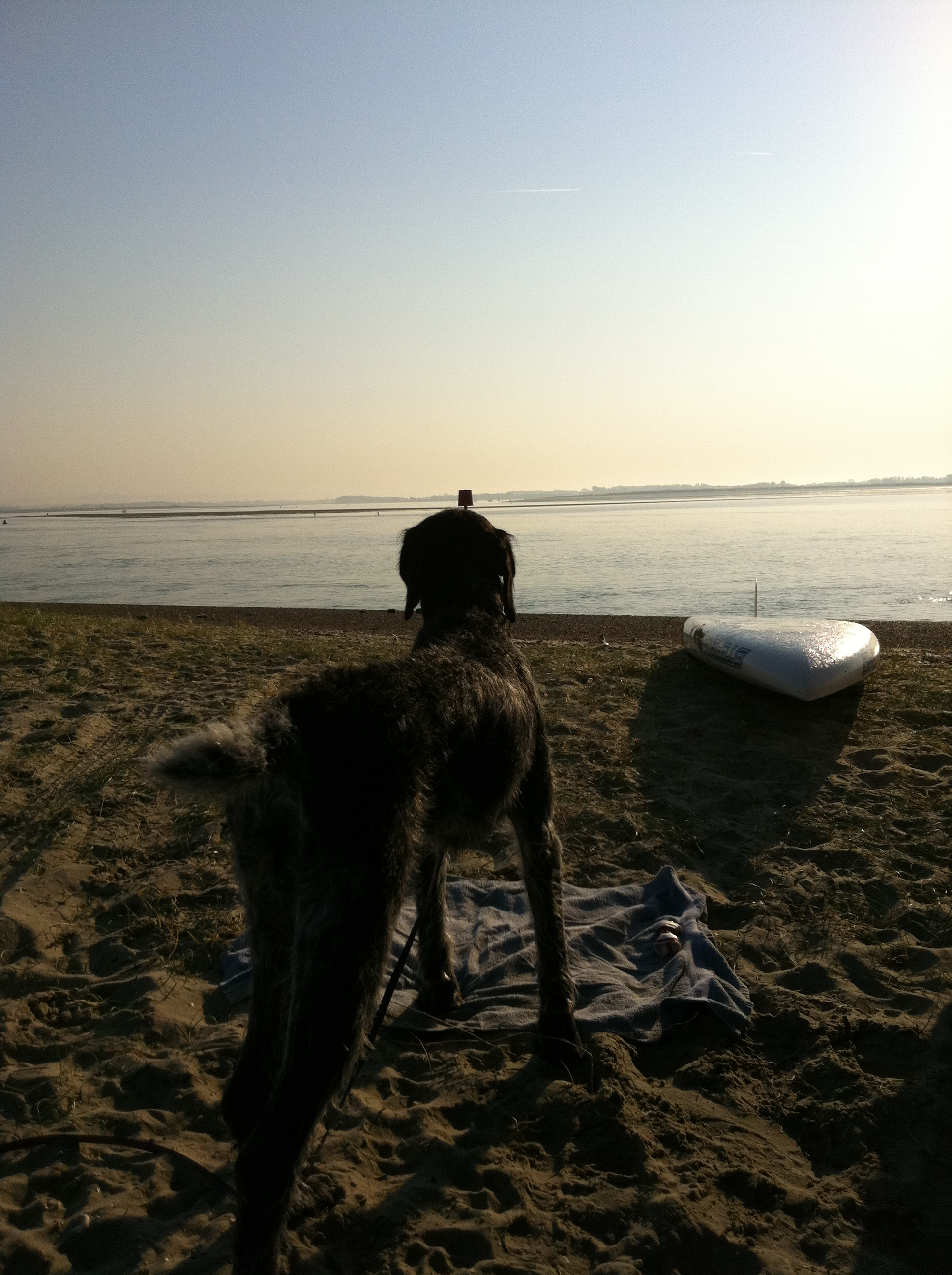 Hayling Island Frostbite 4 - Stunning morning - Even the dog came out for a paddle :)